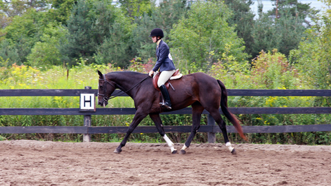 Equitation on the flat